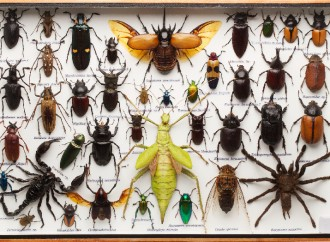 Average U.S. Home Harbors About 100 Types of Insects, Other Critters