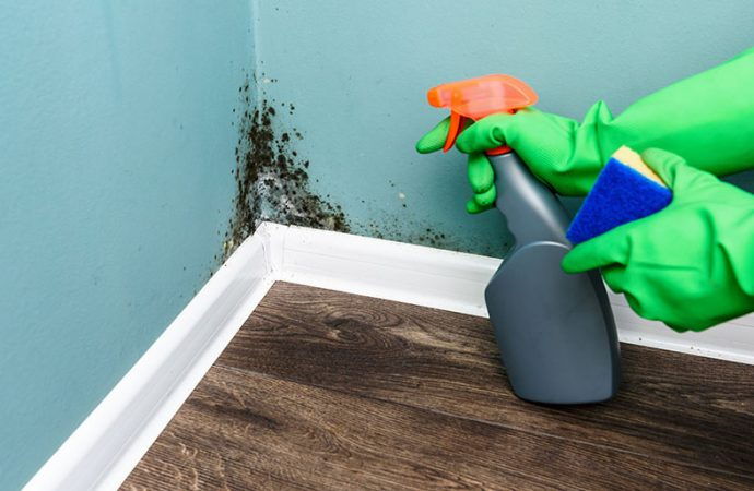 Health Tip: Prevent Mold Growth at Home