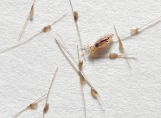 Health Tip: Prevent the Spread of Head Lice